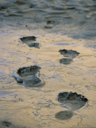 127821-fbhuman-footprints-in-mud-in-the-grand-canyon-posters